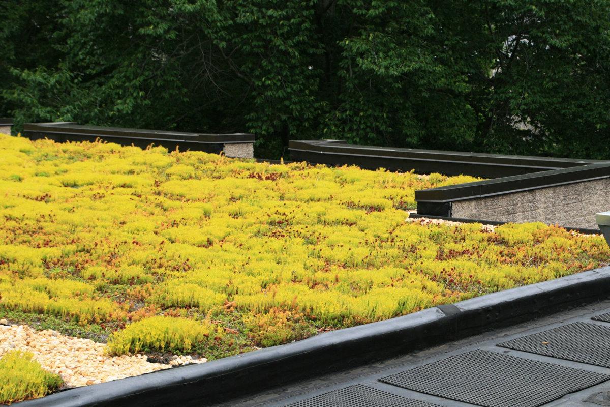 groendak op een plat dak